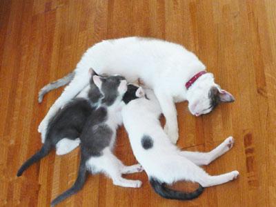 母猫以外全部オス